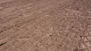 Полтавська селекція. Обробіток ґрунту